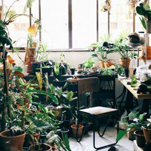 Urban Jungle pra quem não entende muito de planta.